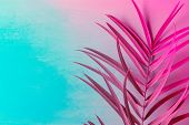 Big Fresh Palm Leaf On Duotone Purple Violet Blue Background. Trendy Neon Colors. Toned. Minimalist  poster