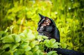 Black Cat In The Green Grass. Kitten Sitting In The Garden, Glade, Meadow.cute Black Cat Lying On Gr poster