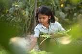 Poverty, A Portrait Of A Poor Asian Girl, Collecting Organic Vegetables poster