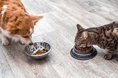 Dog And Cat Eat Together Dry Food From Bowls In The Kitchen poster