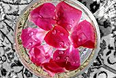 Beautiful Pink Rose Petals In Glass Of Water . Fresh Rose Petals With Droplets On It . Rose Petals W poster