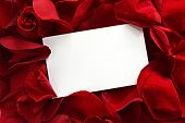 pic of red rose  - Blank white gift card on a bed of red rose petals ready for your message - JPG