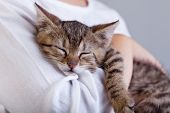 Holding a new pet - a little kitten sleeping on child arm