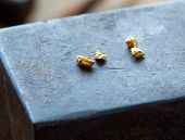 Gold nuggets on a old anvil.