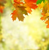 image of blinking  - autumn background - JPG