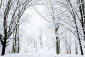 picture of snowy-road  - beautiful winter forest  and the road - JPG