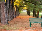 Green Metal Bench Under Pine Trees