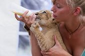 Feeding Little Lion Cub With Milk