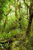 Temperate rain forest, Te Urewera National Park, North Island, New Zealand