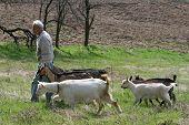 Herdsman
