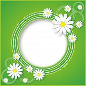 foto of chamomile  - Creative abstract spring background with flowers chamomiles - JPG