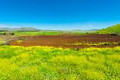 stock photo of golan-heights  - Rows of Vines on the Field in Golan Heights Early Spring - JPG