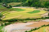 Small Stream Flowing Through The Terraced Fields., Mu Cang Chai District, Yen Bai Province, Vietnam