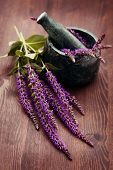 picture of purple sage  - mortar and pestle with fresh sage flowers  - JPG