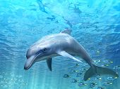 stock photo of oceanography  - Dolphin under water - JPG