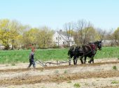stock photo of horse plowing  - Man working his Fields with Horses and Plow - JPG