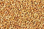 picture of buckwheat  - the background from the small nice buckwheat - JPG