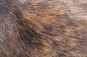 Texture of Tortoiseshell Cat Fur