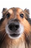 Close Up On Dog's Face