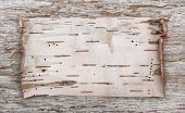 pic of birching  - Birch bark on the old wooden background - JPG