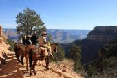 Horse Riders In Grand Canyon
