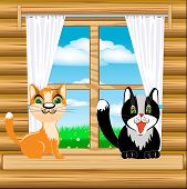 Cats on window