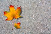 Autumn Maple Leaf On Old Paved Road