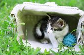 Cute little kitten, outdoors