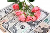 Beautiful roses and money, close up