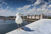 Seagull On Opera House In Oslo, Norway