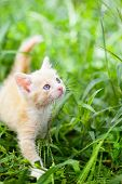 little red cat in green grass
