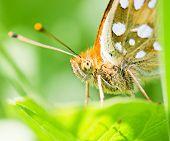 Orange Butterfly On Green Leaf Macro