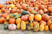 Bumpy Gourd And Pumpkin