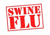 stock photo of swine flu  - SWINE FLU red Rubber Stamp over a white background - JPG
