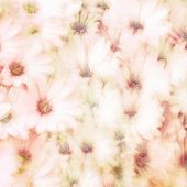 Beautiful floral background, abstract natural texture, gentle daisy flowers, fine art, blooming nature, tender flowery wallpaper
