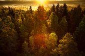 Sun Rising At Swamp