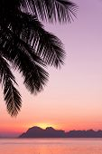 Palm Tree Silhouette at sunset.