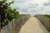 Path To Beach