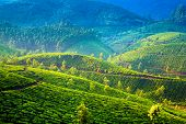 Landscape of the tea plantations in India, Kerala Munnar.