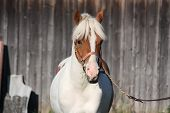 Beautiful Arabian Horse Portrait In Summer