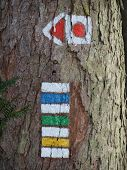 Tourist Signposting On The Bark Of A Tree