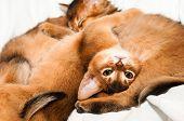 Upside Down Portrait Of Kitten