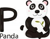 Illustrator of P with panda