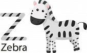 Illustrator of Z with zebra