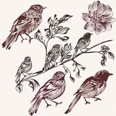 Detailed Hand Drawn Birds Set In Vintage Style