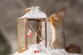 Squirrels Christmas