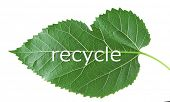Word recycle symbol on green leaf, recycling concept