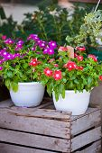 Bright Flowers In White Pots On A Wooden Box
