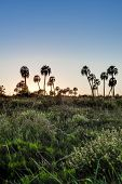 picture of mesopotamia  - Sunrise on El Palmar National Park  - JPG