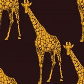 vector  illustration of a giraffe. seamless animal pattern or ba